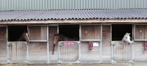 Paardenbox van Paardencrematorium Het Hoeksche Hof